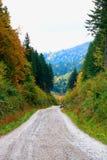 Skogväg i Carpathiansna Fotografering för Bildbyråer