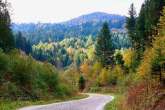 Skogväg i Carpathiansna Royaltyfria Foton