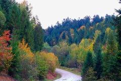 Skogväg i Carpathiansna Arkivfoton