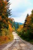 Skogväg i Carpathiansna Royaltyfria Bilder