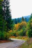 Skogväg i Carpathiansna Arkivbild