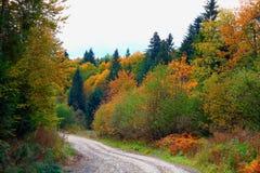 Skogväg i Carpathiansna Arkivbilder