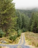 Skogväg i dimma Arkivfoton