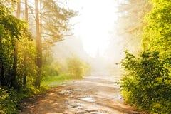 Skogväg i dimman fotografering för bildbyråer