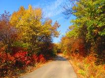 Skogväg i höstfärger Arkivfoto