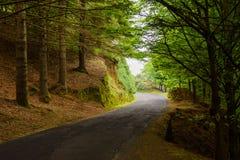 Skogväg i madeiraön, Portugal Fotografering för Bildbyråer