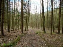 Skogväg i mitt av en skog Arkivbilder