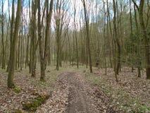 Skogväg i mitt av en skog Fotografering för Bildbyråer