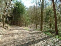 Skogväg i mitt av en skog Royaltyfria Foton