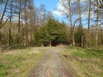 Skogväg i mitt av en skog Royaltyfri Foto