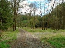 Skogväg i mitt av en skog Arkivbild