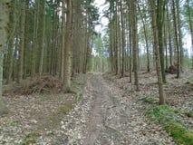 Skogväg i mitt av en skog Royaltyfri Bild