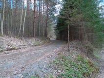 Skogväg i mitt av en skog Arkivfoton
