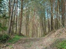 Skogväg i mitt av en skog Royaltyfria Bilder