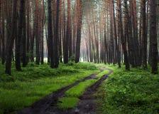 Skogväg i morgonen arkivbilder
