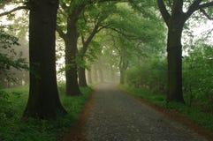 Skogväg i morgonen. Fotografering för Bildbyråer