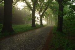 Skogväg i morgonen. Arkivbilder