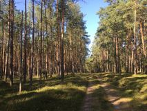 Skogväg i nordliga Polen Arkivfoton