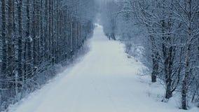 Skogväg i snöfall stock video