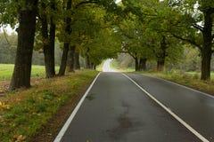 Skogväg i sommar Fotografering för Bildbyråer