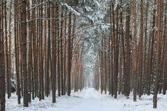 Skogväg i vintern Royaltyfria Bilder