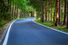 Skogväg med solsken Arkivbild