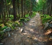 Skogväg med stenar Landskap Royaltyfria Bilder