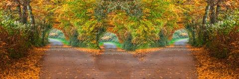 Skogväg med tre andra sätt Arkivfoton