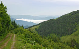 Skogväg ovanför molnen Arkivfoton