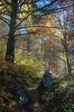 Skogväg på en ljus höstmorgon Arkivfoton