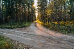 Skogväg på en solig höstafton royaltyfri bild
