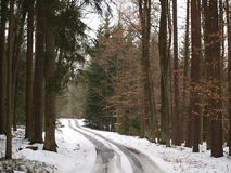 Skogväg på slutet av vintern Arkivbilder