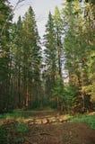 Skogväg som äter trädkronor Arkivfoto