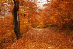 Skogväg som täckas i bruna blad Arkivbild