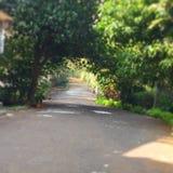 skogväg till Arkivbild