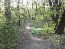 skogväg till royaltyfria bilder