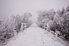 Skogvägen under insnöat vintern Royaltyfri Foto