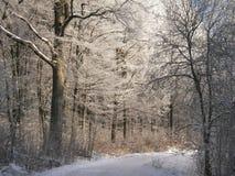 skogvägvinter royaltyfri fotografi