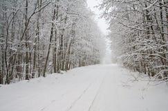 skogvägvinter royaltyfria bilder