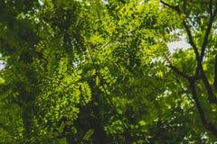 Skogväxter arkivbild