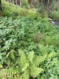 Skogväxter royaltyfria foton