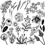 Skogväxter arkivbilder