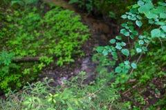 Skogväxter av den mellersta musikbandet Grön färg Arkivfoto
