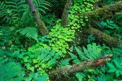 Skogväxter av den mellersta musikbandet Grön färg Royaltyfri Bild