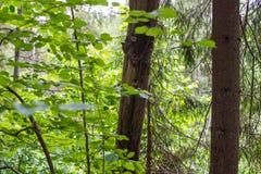 Skogväxter av den mellersta musikbandet Grön färg Arkivbild