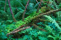Skogväxter av den mellersta musikbandet Grön färg Royaltyfri Foto
