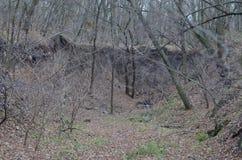 Skogvallgrav Arkivbilder