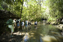 skogvandringregn Arkivbilder