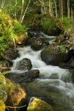 skogvattenfall Arkivfoton