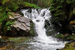 Skogvattenfall Arkivbild